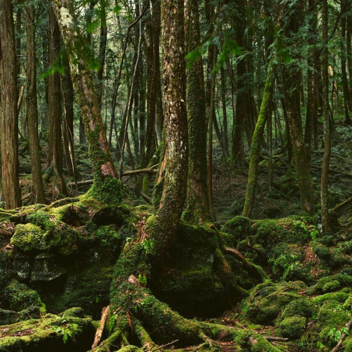 SCARIEST PLACES OF THE WORLD- AOKIGAHARA, JAPAN